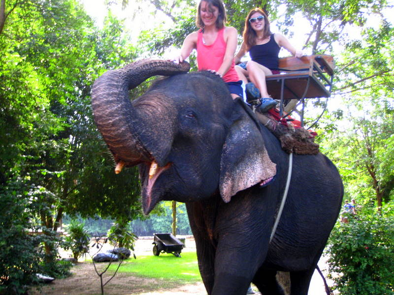On a (real, live!) elephant in Thailand.