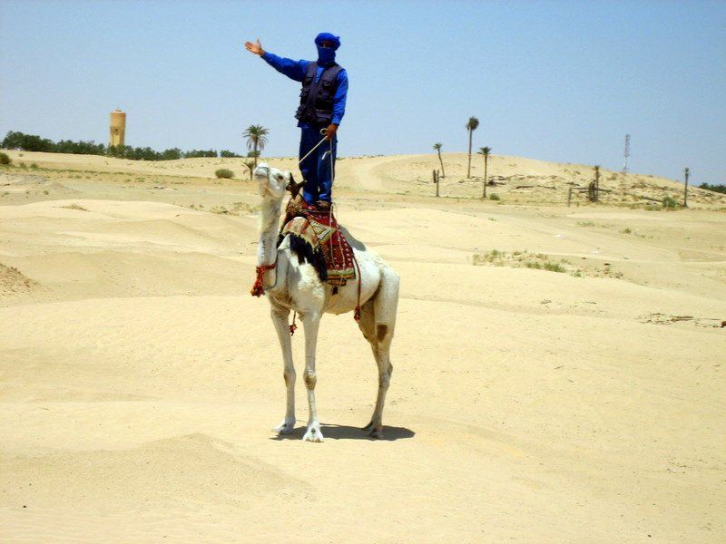 Camel acrobatics on the GEEO teacher travel trip to Tunisia.