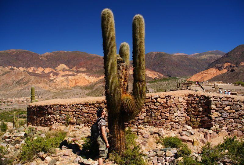 Encountering a prickly situation during nomadic world travel.