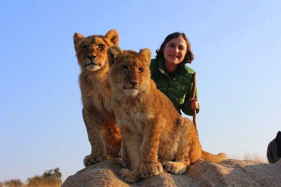 Sara with lions at a conservation program in Zimbabwe through GEEO
