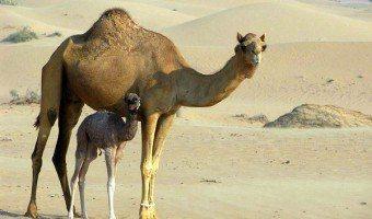 Bill: Educator Abroad by Becoming a School Headmaster in Jordan