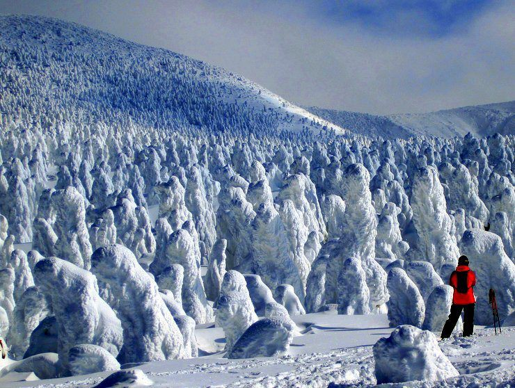 At Zao Onsen ski resort in Japan. Those are trees caked in snow!