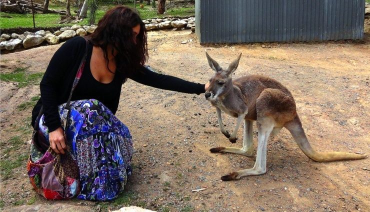 Maria falling in love with a kangaroo in Adelaide, Australia.