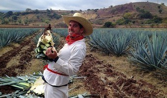 Traveling the World by Finding Vastly Different Odd Jobs