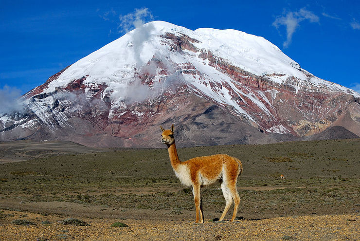Beautiful wildlife spotted by Piero at Mt. Chimborazo in Ecuador.