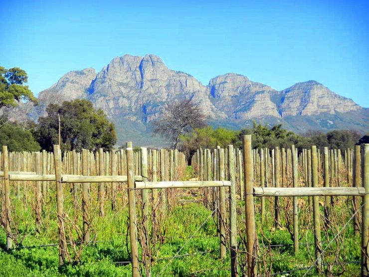 After volunteering, touring the Solms-Delta vineyards outside of Cape Town.