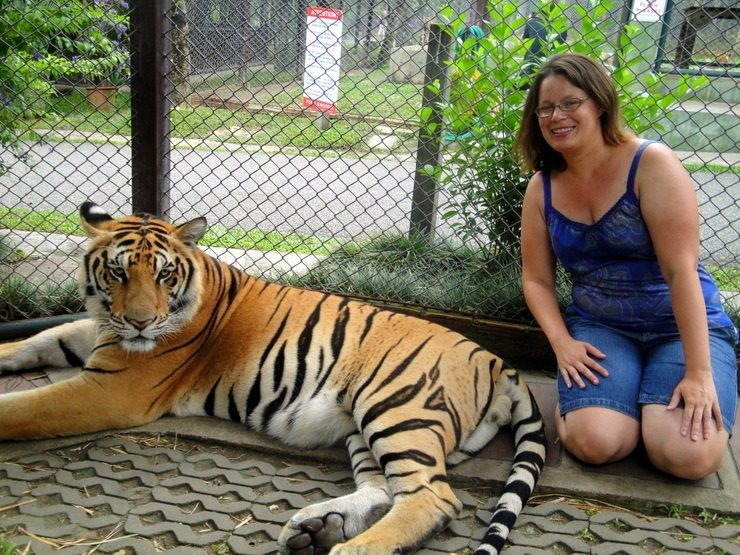 "Chiang Rai, Thailand: ""It's the eye of the tiger!"" There was no quick escape- the fence was electrified behind me. One of the posted rules: Don't stick hands or fingers inside the cages. Ironically, you could go in the cages and take photos with the animals."