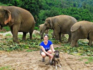 Elephant Nature Park, with the elephants and one of the rescued dogs named Ahn.