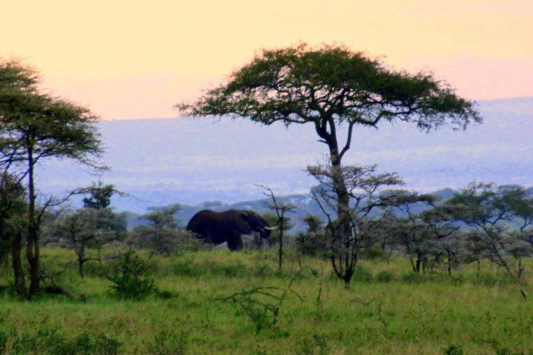 View from the tent while camping in Serengeti National Park, Tanzania.