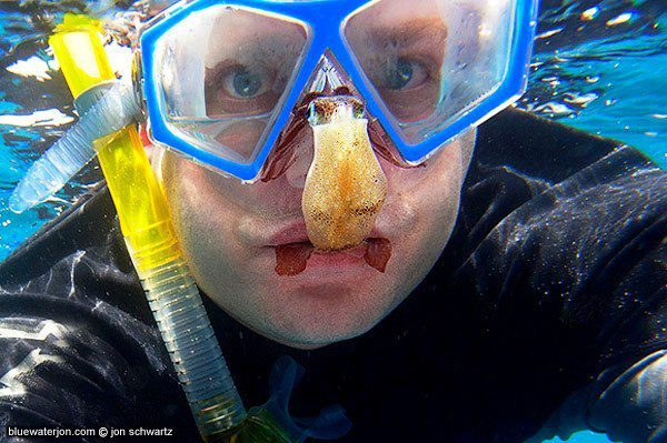 Snorkeling with squid
