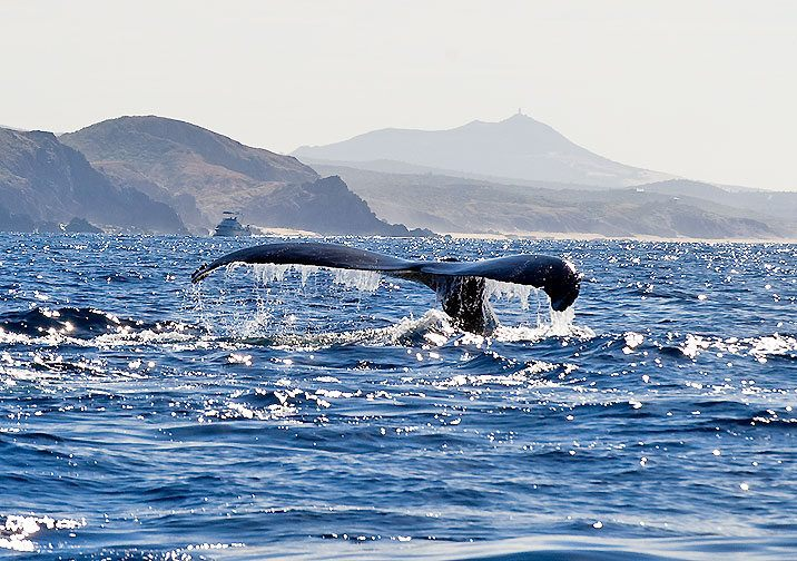 A lovely whale photo by Jon.