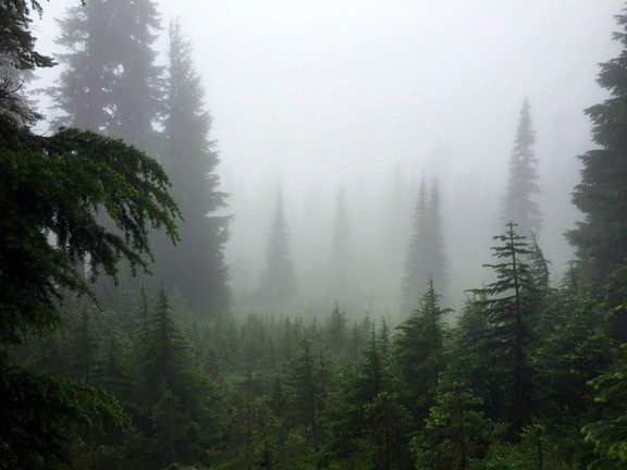 Mist in the trees along a trail at Mt. Rainier.