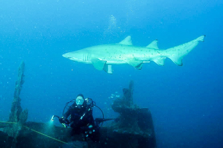 Mark diving off North Carolina. What a shot!