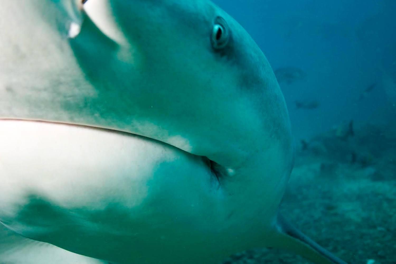 Super up close with a Bull Shark in Fiji!