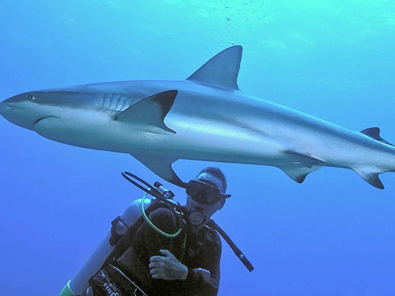 Mark scuba diving right next to a shark!