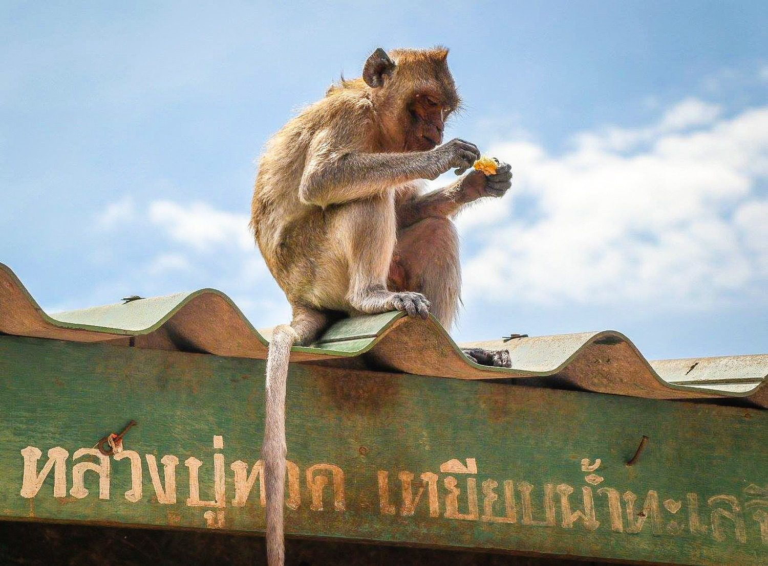 A monkey spotted at Wat Khao Takiap, Thailand.
