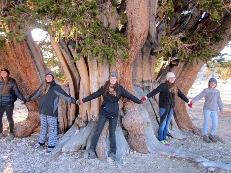 Passion projects: Students visiting the bristlecone pines.