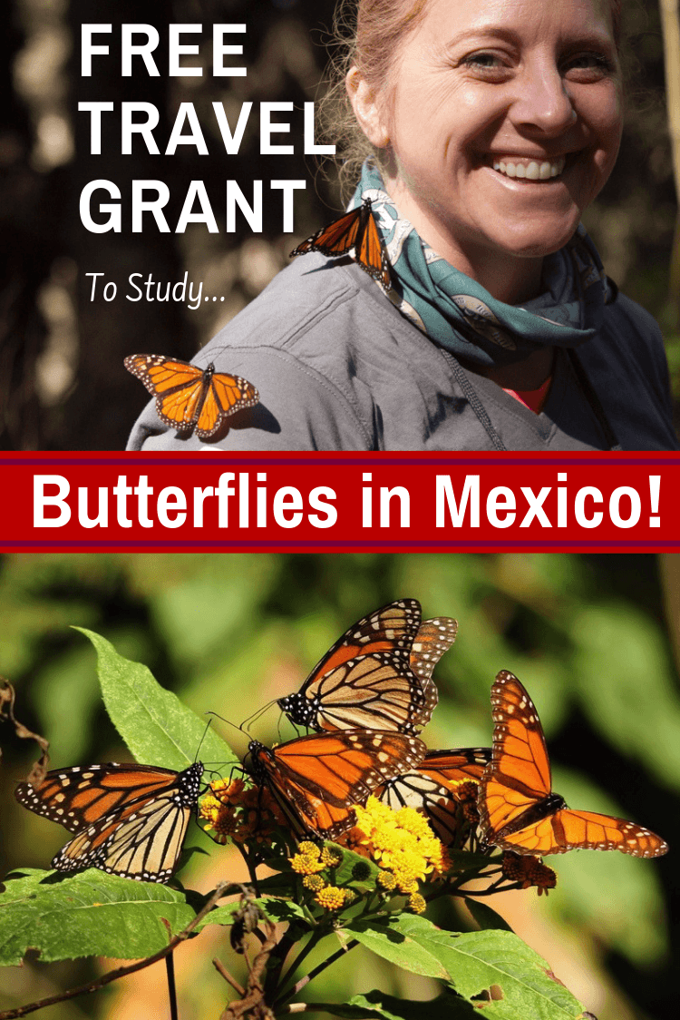 Free travel grant for teachers to learn about monarch butterflies in Mexico! Tips on applying for the educational scholarship and amazing photos of the monarch migration. #Travel #TeacherTravel #Mexico #MonarchButterflies #Butterflies #MonarchMigration #TravelGrant #TravelScholarship #EducationalTravel