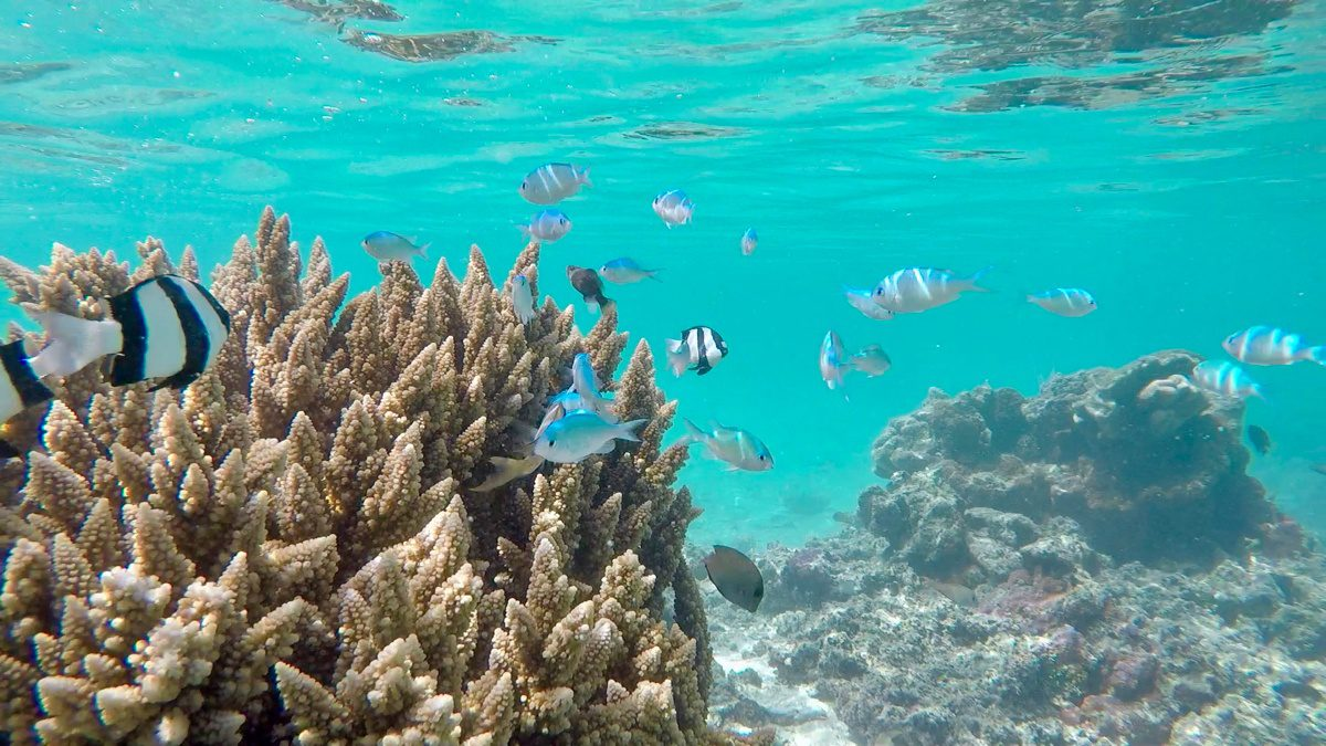 Fish! Underwater life in the Cook Islands.