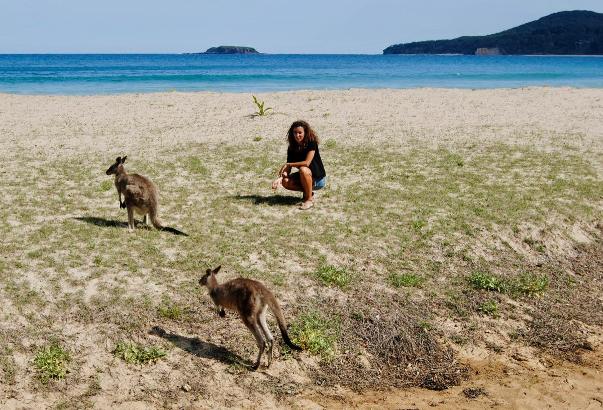 Kangaroos hopping around the beach in Australia.