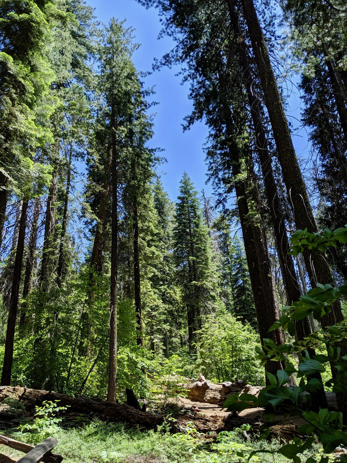 Touring the forests of California!
