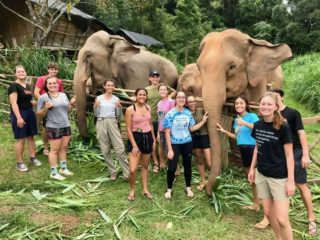 Helping elephants in Thailand.